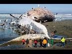اليمن اليوم- بالفيديو  أكبر 10 حيوانات وجدت على الشاطئ