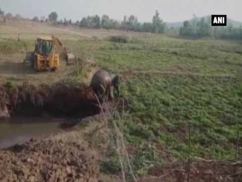 اليمن اليوم- بالفيديو لحظة إنقاذ فيل بعد سقوطه فى حفرة كبيرة في الهند
