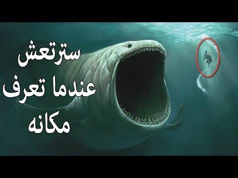 اليمن اليوم- قصة الحوت الذى ابتلع سيدنا يونس ومكانه الحالي