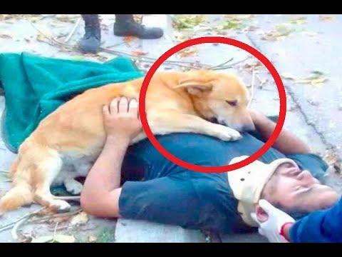 اليمن اليوم- شاهد كلاب وفية لأصحابها حتى النهاية