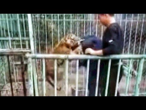 اليمن اليوم- شاهد نمر صغير يهرب من حديقة حيوان