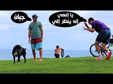 اليمن اليوم- شاهد شاهد رد فعل الفتيات علي مقلب الكلب المسكين