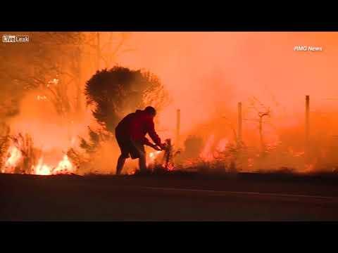 شاهد شاب يخاطر بحياته لإنقاذ أرنب من حرائق الغابات
