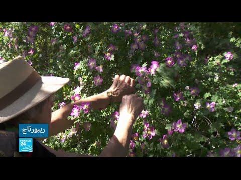 شاهدامرأة تعتني بحديقة مهجورة في ليون الفرنسية