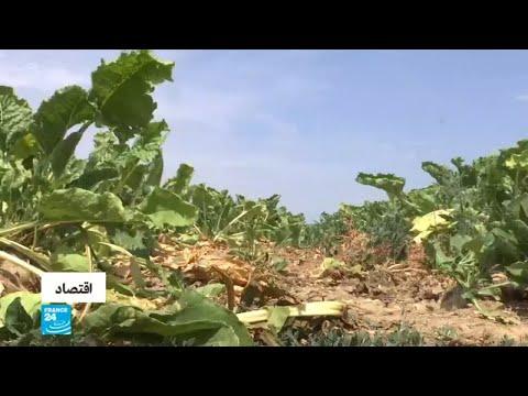 موجة حر وجفاف تهدد نشاط المزارعين في ألماني