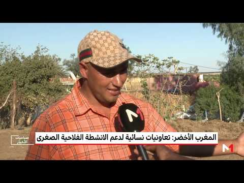 شاهد المغرب الأخضر يكشف دور الزراعة التضامنية في تطوير مستوى الفلاحين الصغار