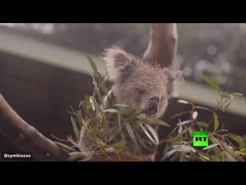 شاهد احتفال الحيوانات بهطول الأمطار في أستراليا