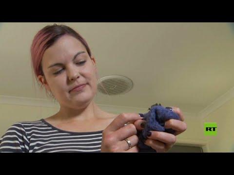 شاهد الشابة التي تعتني بالخفافيش المصابة في أستراليا