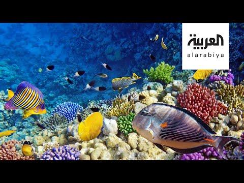 شاهد حماية الشعب المرجانية على طاولة دول مجموعة العشرين