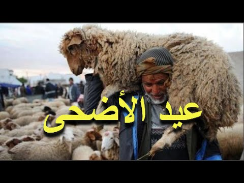 اليمن اليوم- فيديو فلكي مغربي يبشر المغاربة بموعد عيد الأضحى في المغرب لسنة 2016