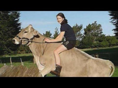 اليمن اليوم- نيوزلندية تروض الأبقار بعد منعها من ركوب الخيل