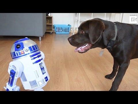 اليمن اليوم- شاهد رد فعل كلب عندما رأى روبوت لأول مرة