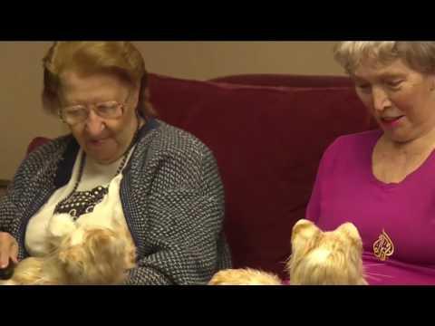 اليمن اليوم- ابتكار قطط إلكترونية مؤنسة للمسنين