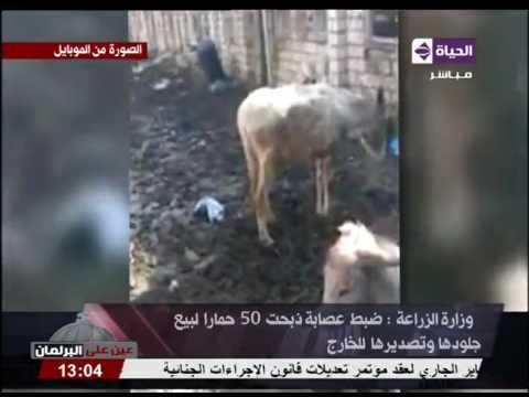 اليمن اليوم- شاهد توقيف عصابة ذبحت 50حمارًا