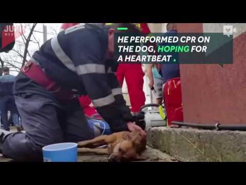 اليمن اليوم- بالفيديو رجل إطفاء يعطي قبلة الحياة إلى كلب يحتضر
