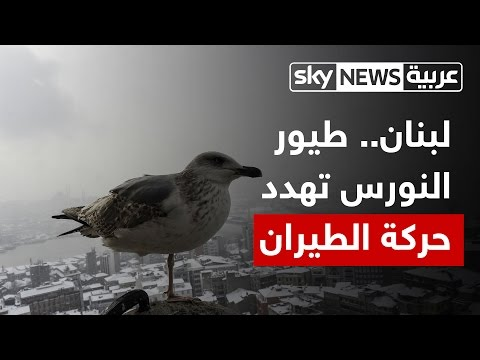 اليمن اليوم- شاهد طيور النورس تهدد سلامة الطيران المدني