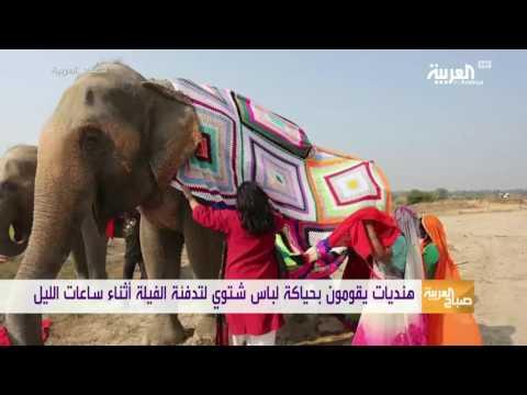 اليمن اليوم- شاهد هنديات يقمن بحياكة لباس شتوي لتدفئة الفيلة