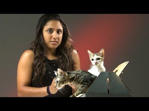 اليمن اليوم- شاهد ردود أفعال المصابين بـ فوبيا القطط