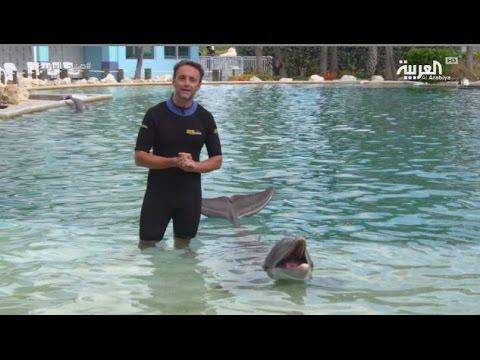 اليمن اليوم- بالفيديو تجربة السباحة مع الدلافين في سي كواريوم ميامي