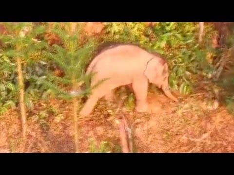 اليمن اليوم- شاهد محاولات صينية لإنقاذ فيل صغير مُصاب