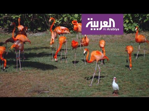 اليمن اليوم- شاهد جزيرة الغابة موطن لأكثر من 120 صنفًا من الحيوانات