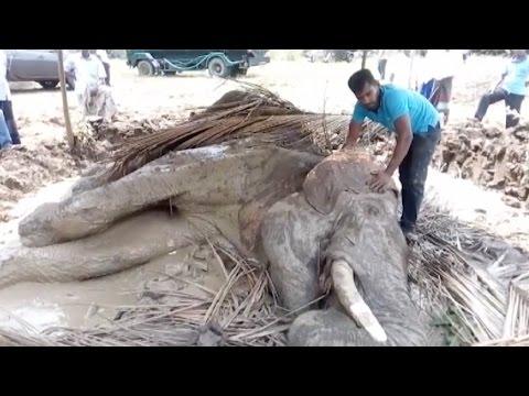 اليمن اليوم- الأهالي يحاولون إنقاذ فيل مصاب