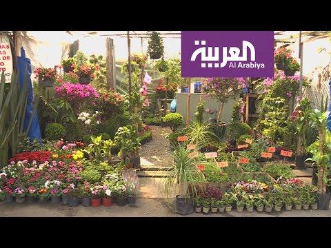 اليمن اليوم- شاهد جولة في سوق الزهور تشوميلكو في المكسيك
