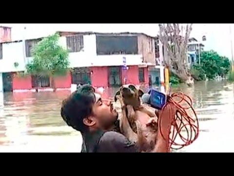اليمن اليوم- مراسل يوقف بث تقرير على الهواء لإنقاذ كلب من الفيضان