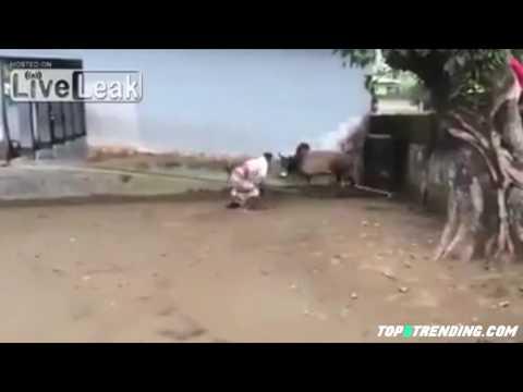 اليمن اليوم- بقرة هائجة تطيح برجل في الهند