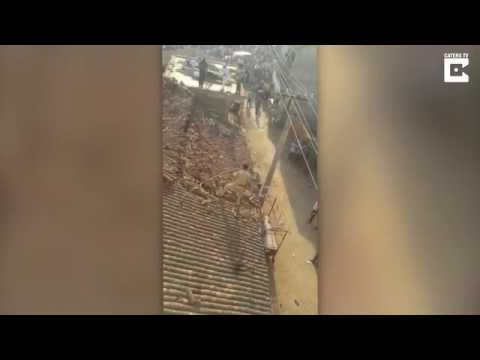 اليمن اليوم- هجوم نمر يجبر عامل إنقاذ على القفز من فوق سطح منزل