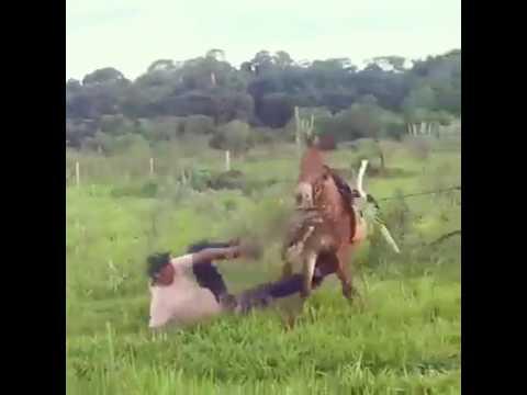 اليمن اليوم- بالفيديو حصان مذهل ينتقم من رجل أثار غضبه