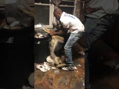 اليمن اليوم- شخص يثير الجدل بتدريب كلبه على التخلص من القمامة