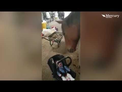 اليمن اليوم- رد فعل طفل يرى حصانًا لأول مرة