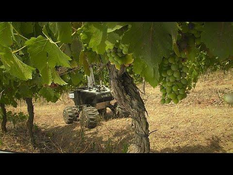 اليمن اليوم- شاهد فينبوت لزيادة القدرة التنافسية لمزراعي الكرمة ومصنعي النبيذ الأوروبيين