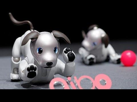 شاهد الكلب أيبو روبوت جديد من سوني