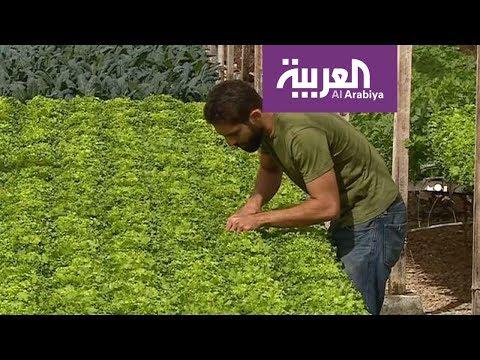 شاهد مصر تزرع بالماء