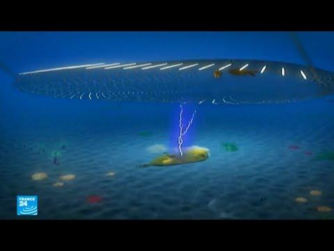 شاهد جدل بشأن صيد الأسماك بالصعق الكهربائي في بحر الشمال