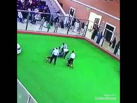 بالفيديو لحظة هجوم كلب على رجل في السعودية