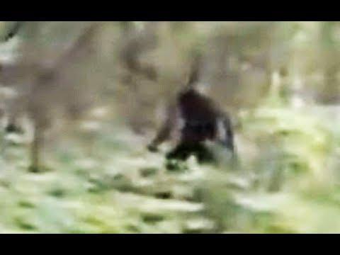 بالفيديو لقطات جديدة لظهور الوحش الأسطوري بيغ فوت