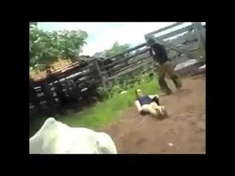بالفيديو بقرة تلقن امرأة درسًا قاسيًا