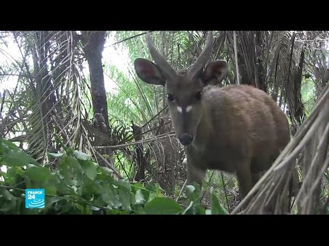 جهود لإنقاذ الحيوانات النادرة في بنين