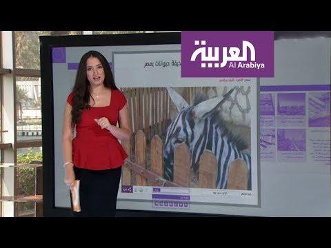 تعرف على قصة الحمار المزور في مصر
