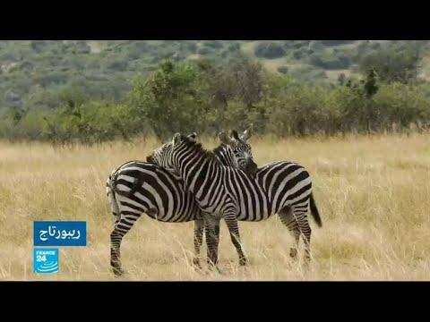 شاهدجدل في كينيا بسبب مشاريع عمرانية في المنتزه الوطني