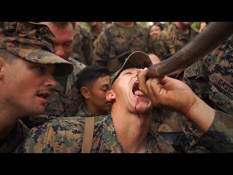 شاهد جنود المارينز الأميركيون يشربون دماء ثعبان الكوبرا