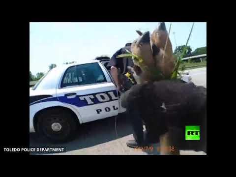 شاهد شرطة المرور في ولاية أميركية تنقذ غزالًا قرب طريق سريع