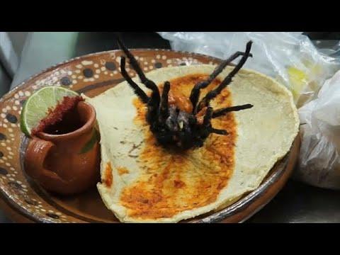 شاهد أحدث إصدارات المطبخ المكسيكي تاكوس العناكب