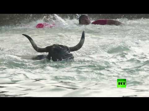 شاهد المهرجان السنوي ثيران في البحر في إسبانيا