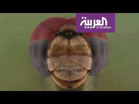 شاهد علاقة مُصوّر سعودي بالحشرات من الـالفوبيا إلى التخصّص