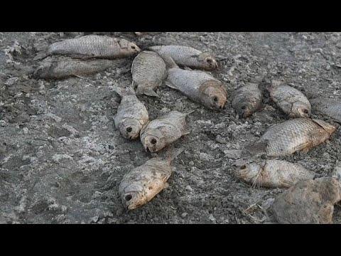 الجفاف يتسبب بنفوق عشرات الآلاف من الأسماك في بحيرة باليونان