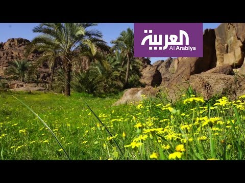 شاهد مغامرات في وادي مشار في حائل